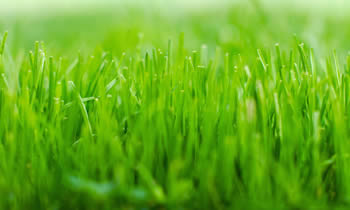 Lawn Service in Lancaster PA Lawn Care in Lancaster PA Lawn Mowing in Lancaster PA Lawn Professionals in Lancaster PA