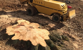 Stump Removal in Lancaster PA Stump Removal Services in Lancaster PA Stump Removal Professionals Lancaster PA Tree Services in Lancaster PA