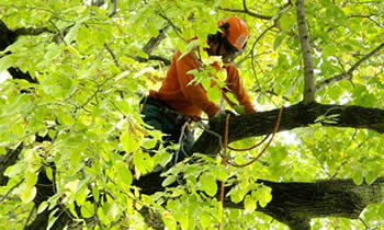 Tree Trimming in Lancaster PA Tree Trimming Services in Lancaster PA Tree Trimming Professionals in Lancaster PA Tree Services in Lancaster PA Tree Trimming Estimates in Lancaster PA Tree Trimming Quotes in Lancaster PA