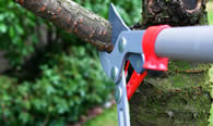 Tree Pruning Services in Lancaster PA