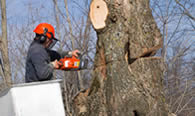 Tree Removal in Lancaster PA